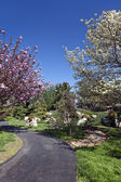 Spring Flowering Trees on a Park Pathway — Stock Photo