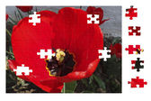 Puzzles tulip — Stock Photo