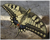 Puzzles on paper beautiful butterfly — Stock Photo
