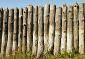 Old paling of sharpened logs — Stock Photo