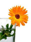 Bright orange flower — Stock Photo