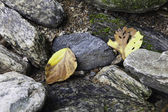 Two yellow leaves. — Stock Photo