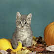 Royalty-Free Stock Photo: Halloween kitten.