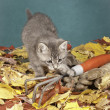 Kitty paws at garden tool. - Stock Photo