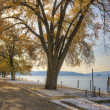 Trees by the lake. — Stock Photo