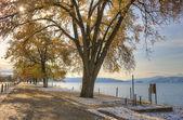 Trees by the lake. — ストック写真