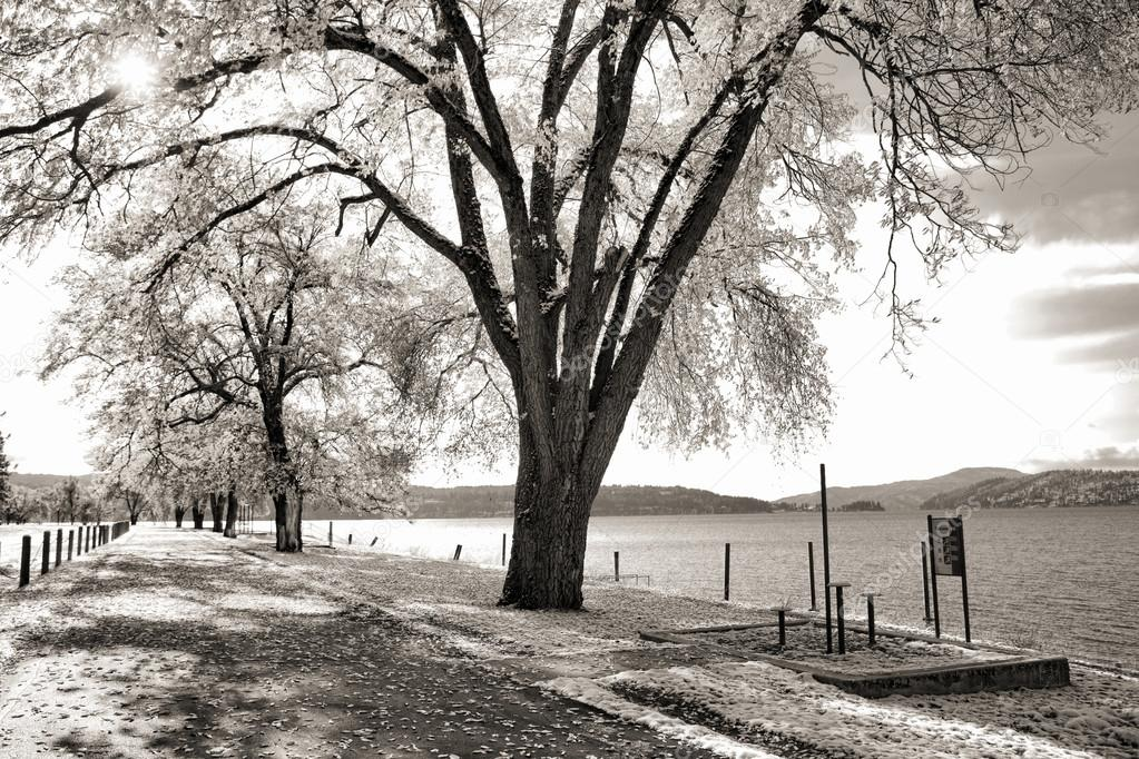 A black and white image of trees lined along  Coeur d'Alene Lake in northern Idaho. — Stock Photo #14809971