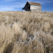 Rustic barn and flowing grass. - Stock Photo