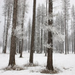 Inter scenic of frost on trees. — Stock Photo