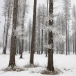 Stock Photo: Inter scenic of frost on trees.