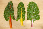 Rainbow chard leaves. — 图库照片