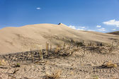 The desert plants at Bruneau dunes. — Stock Photo