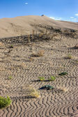 Plants in sand at Bruneau Dunes. — Stock Photo