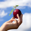 Holding plum against the sky. — Stock Photo #31324927