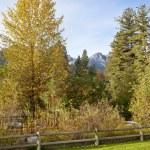 Fall colors in Washington. — Stock Photo #33540087