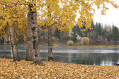 Autumn scene by river. — Stock Photo