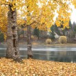 Autumn scene by river. — Foto de Stock