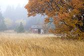 Staré kůlny v mlze. — Stock fotografie
