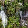 Icicles and moss. — Stock Photo #38538045