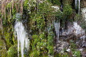 Icicles and moss. — Stock Photo