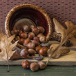 Still image of acorns. — Stock Photo #41526147