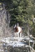 Majestic horse in winter. — Zdjęcie stockowe