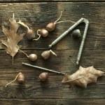 Acorns on weathered wood. — Stock Photo #44385685