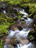 Ruisseau de montagne. — Photo
