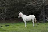 White horse in grass. — Stock Photo