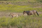 Horse behind its pony. — Stock Photo