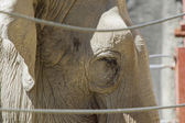 Close up of elephant. — Stock Photo