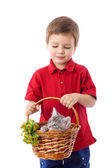 Little boy with kitten in basket — Stock Photo