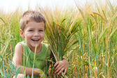 Little boy in a wheat field — Stock Photo