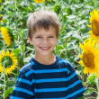 Stock Photo: Smiling boy between sunflower