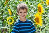 Smiling boy between sunflower — Stock Photo