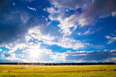 Summer landscape with sky and field — Stock Photo