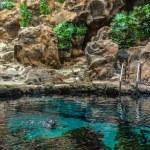 Penguins Pool — Stock Photo