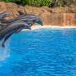 Dolphins Jumping Over a Rope — Stock Photo
