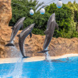 Dolphins Reaching Balls — Stock Photo #44011323