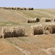 Round bales of straw — Stock Photo #38013239