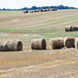 Round bales of straw — Stock Photo #38013267