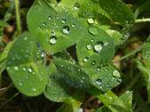 Dew on plants — Stock Photo