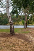 Trees by lake — Stock Photo