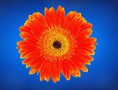 Flor — Fotografia Stock