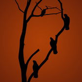 Parrot silhouette — Stock Photo