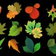Set of leaves of different trees — Stock Vector #20397751