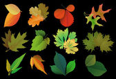 Set of leaves of different trees — Stock Vector