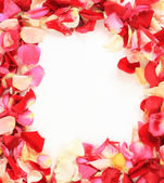 Frame of beautiful petals of roses — Stock Photo