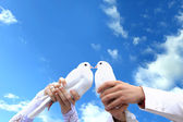 Pigeons to the wedding. — Stock Photo