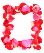 Frame van prachtige bloemblaadjes van rozen — Stockfoto